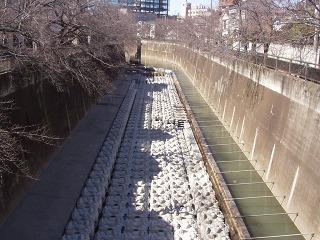 都市河川の抽水植物02