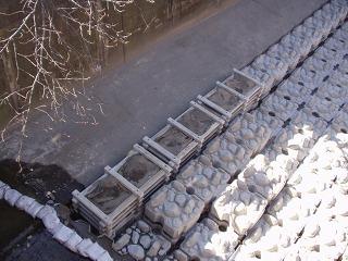 都市河川の抽水植物03